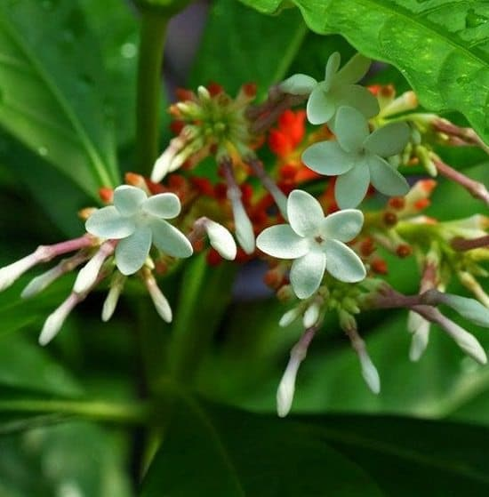 Natural Snake Repellent Plants to keep them away from yard