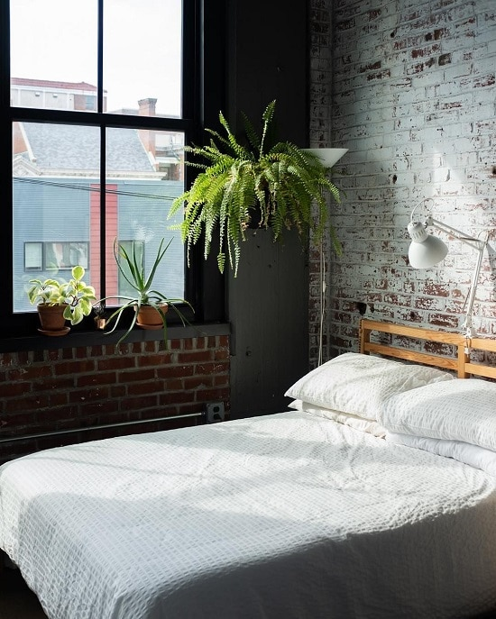 Best Bedroom Plants for purified air