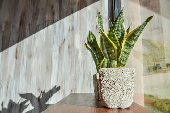 How to Keep Houseplants Alive in Winters