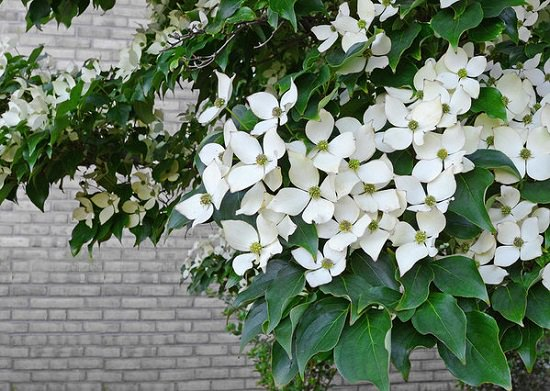 Shrubs for Shade that you can grow today