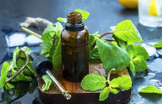 Use Peppermint Oil To Repel Mice In Home in the most effective way
