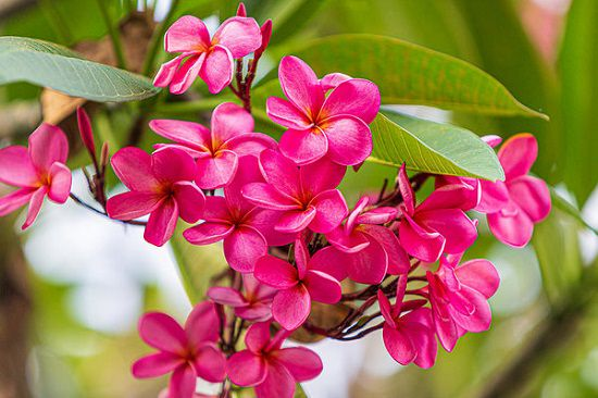 Pink Flower Names for your garden and pots
