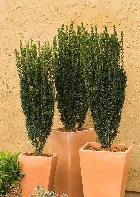 Shrubs for Shade to enhance the appeal of your house