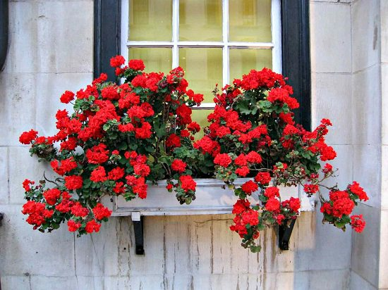 Best Plants for Balcony that you can grow