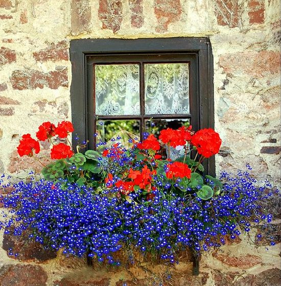 magnificent and bright Cascading Flowers for Window Boxes