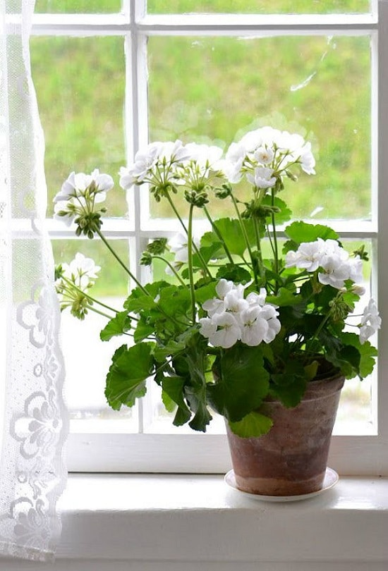 Indoor Plants with White Flowers for friends