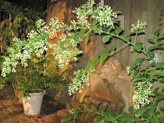 Bushes with White Flowers 21