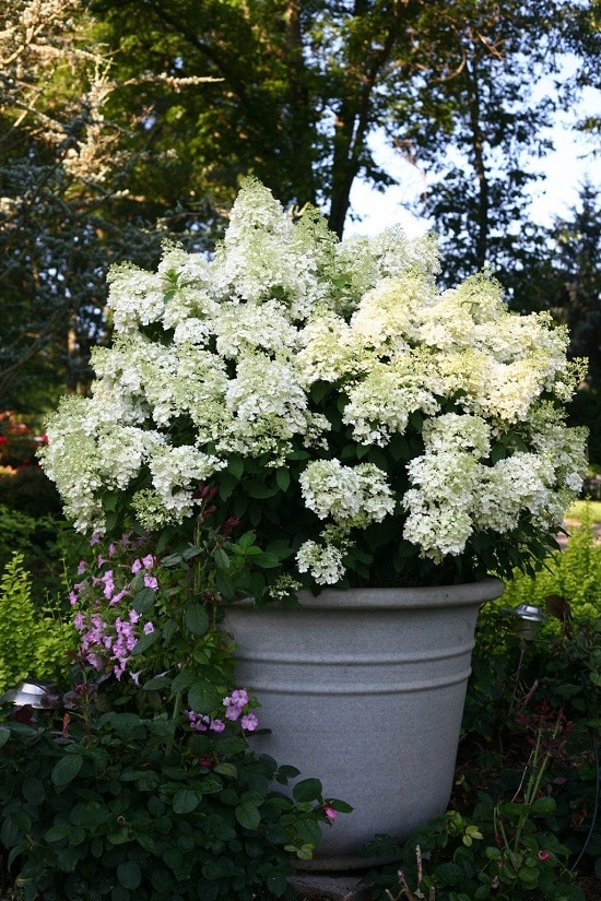 Bushes with White Flowers 2