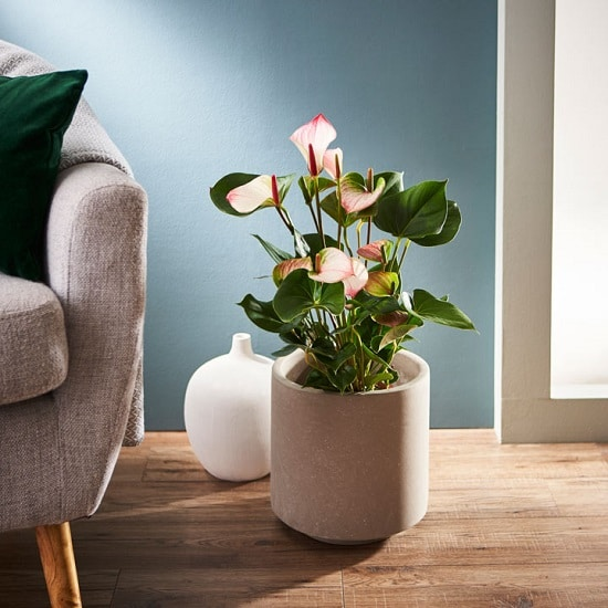 Indoor Plants with White Flowers you can grow