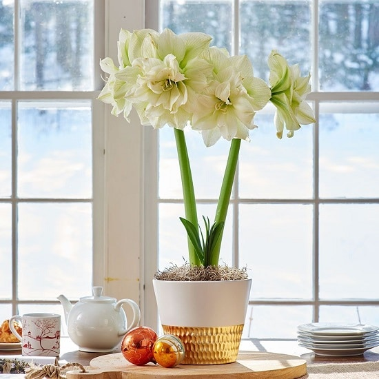 Indoor Plants with White Flowers for rooms