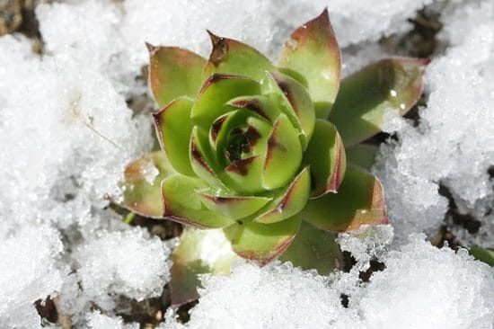 Succulent Myths decoded