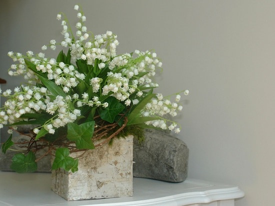 Indoor Plants with White Flowers for your house