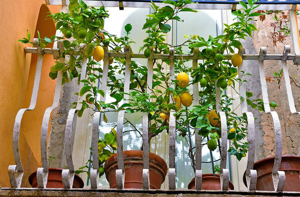 Best Plants for Balcony that you can grow and change its look
