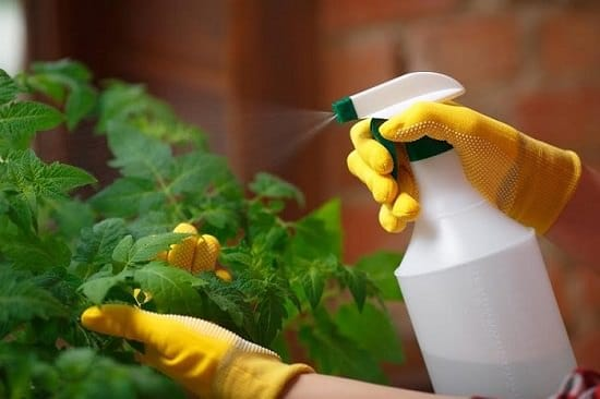 Best Essential Oils for Gardening and How to Use Them 7