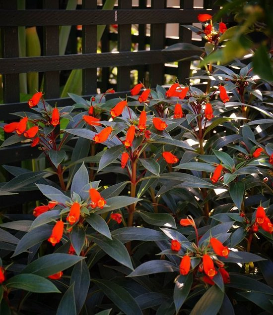 Best Flowers to Plant in Florida 2