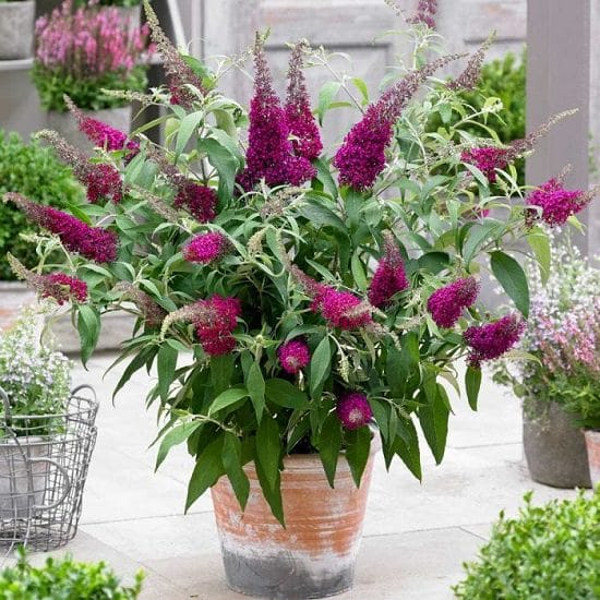 Best Flowers to Plant in Florida 13