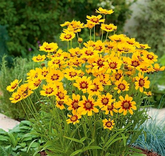 Best Flowers to Plant in Florida