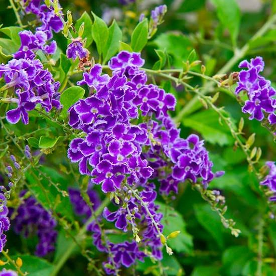 Best Flowers to Plant in Florida 4