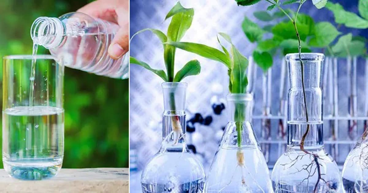 Is Distilled Water Good for Plants | Watering Plants With ...