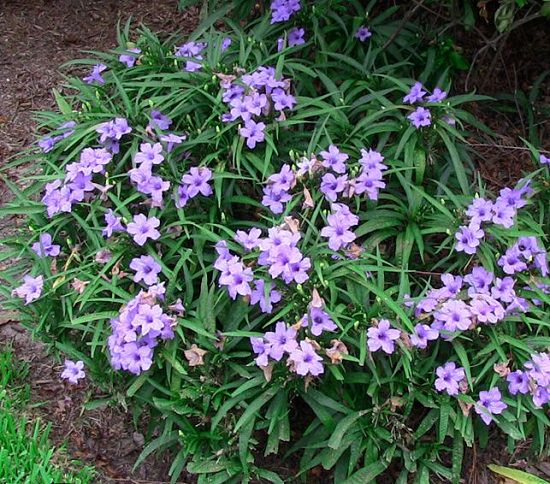 Best Flowers to Plant in Florida 6