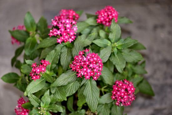 Best Flowers to Plant in Florida 12