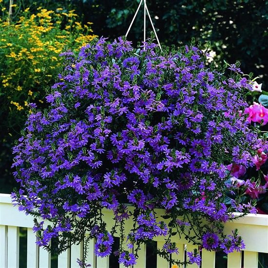Best Flowers to Plant in Florida 19