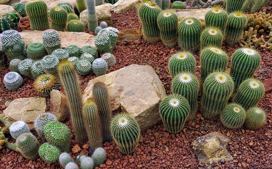DIY Cactus Garden Ideas 5