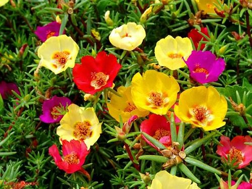 Best Drought Tolerant Plants 6
