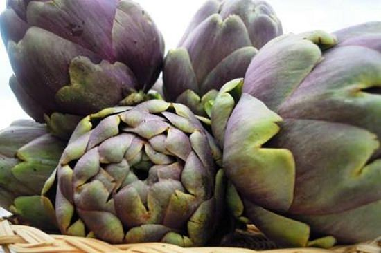 Types of Artichokes 7