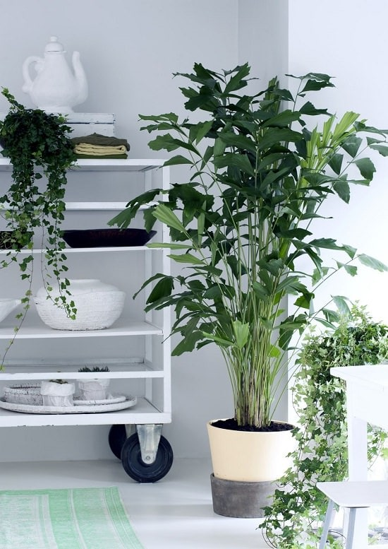 Different Types of Indoor Plants 4
