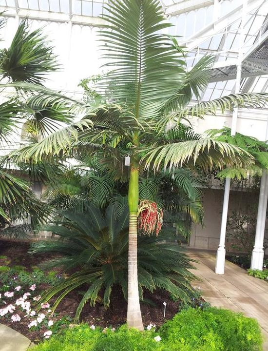 Best Palm Trees in Florida 9