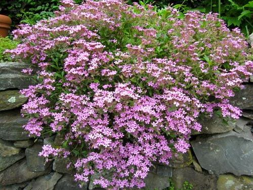Best Drought Tolerant Plants 9