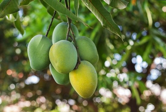 Different Types of Mangoes 10