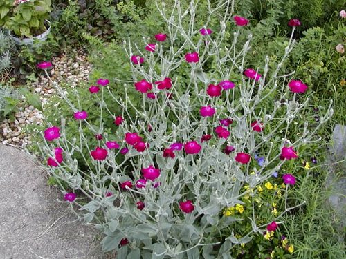 Best Drought Tolerant Plants 12
