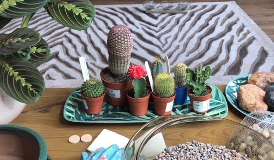 DIY Cactus Garden Ideas 2