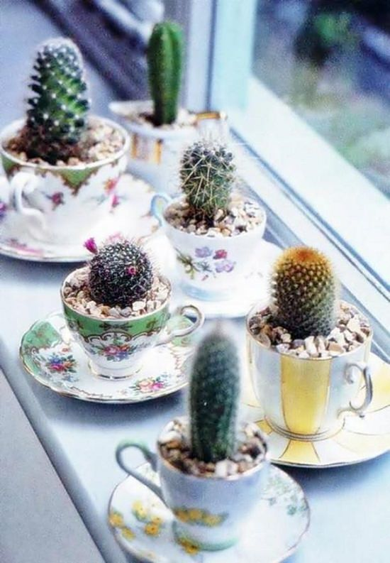 DIY Cactus Garden Ideas 4