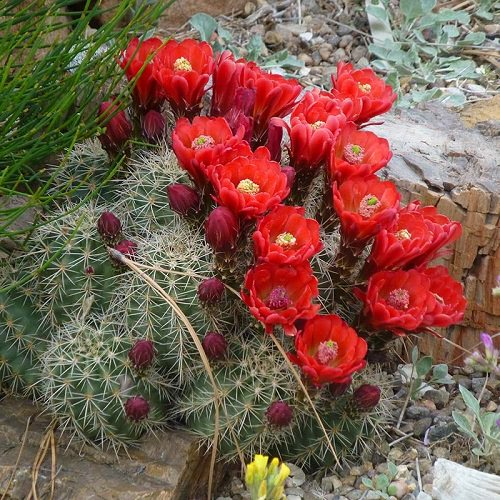 Best Drought Tolerant Plants 5