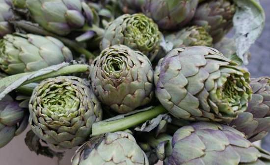 Types of Artichokes 2