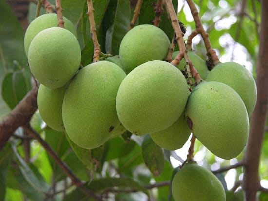 Different Types of Mangoes 6