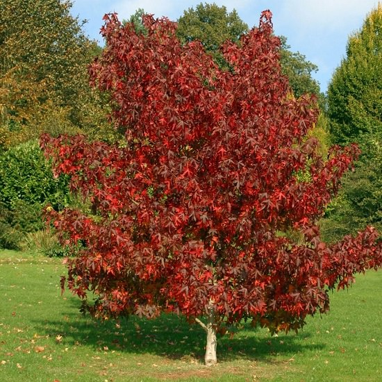 Best Trees to Plant in Georgia 2