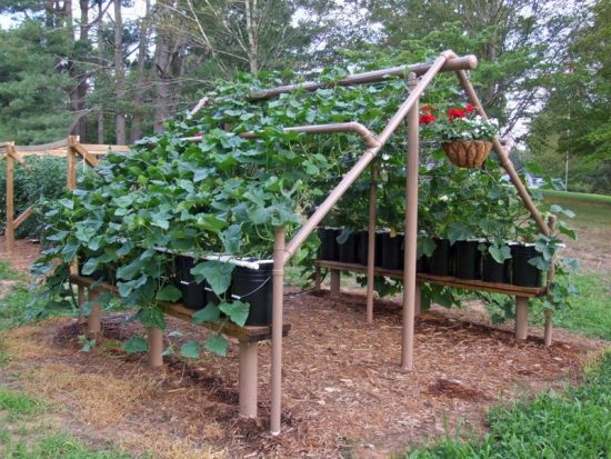Cucumber Trellis Ideas 12