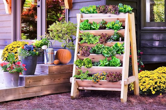 DIY Vertical Gardening Ideas 7