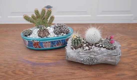 DIY Cactus Garden Ideas 9