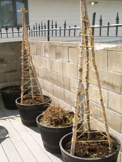 Cucumber Trellis Ideas 14