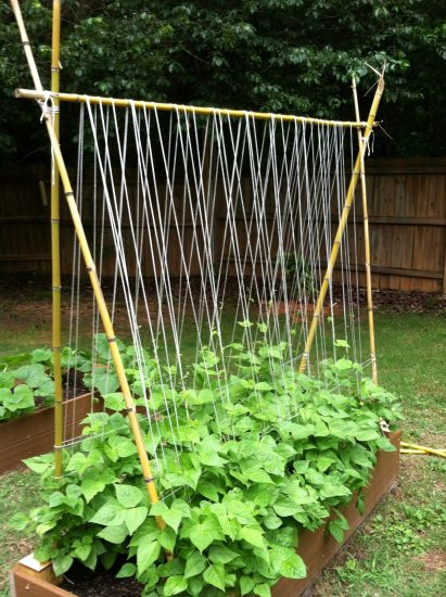 Cucumber Trellis Ideas 15