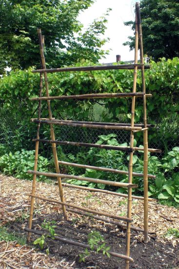 Cucumber Trellis Ideas 17