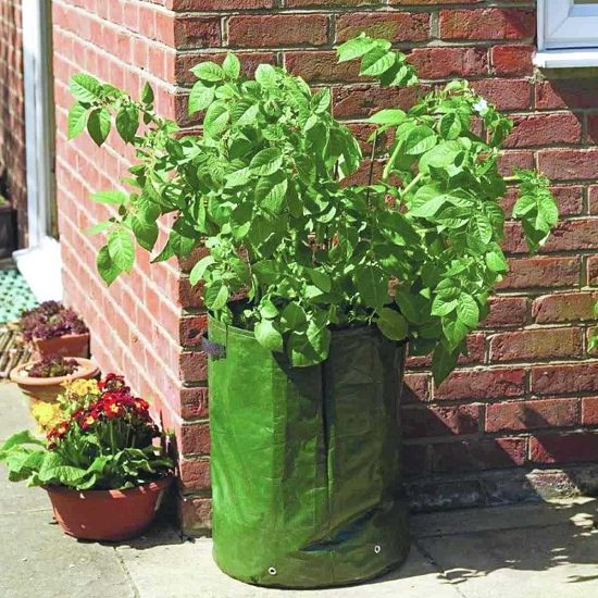 Vegetables You Can Grow in Grow Bags