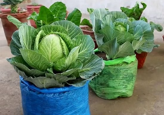 Vegetables You Can Grow in Grow Bags 5