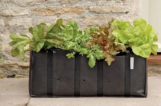 Vegetables You Can Grow in Grow Bags 2