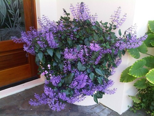 Ornamental Plants for Shade 7